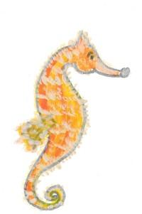 sea horse cropped